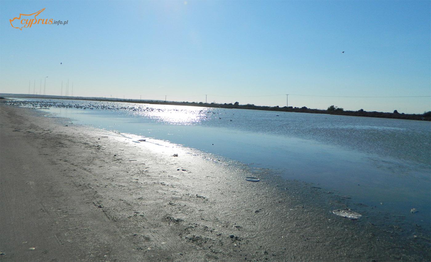 Jezioro Słone - Limassol
